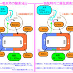 血液中のガス分圧 | 生理学