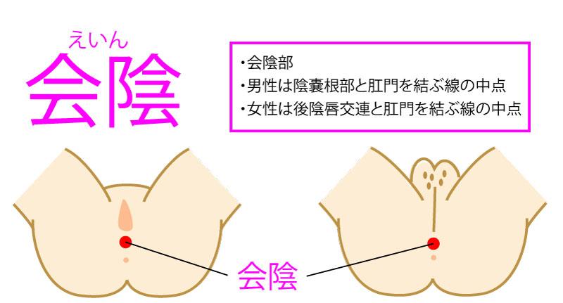 会陰(えいん:CV1)