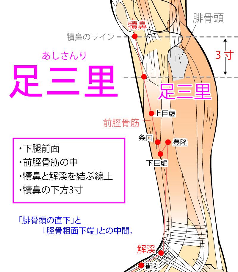 足三里(あしさんり:ST36)
