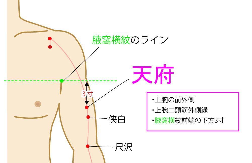 天府(てんぷ),経穴,ツボ