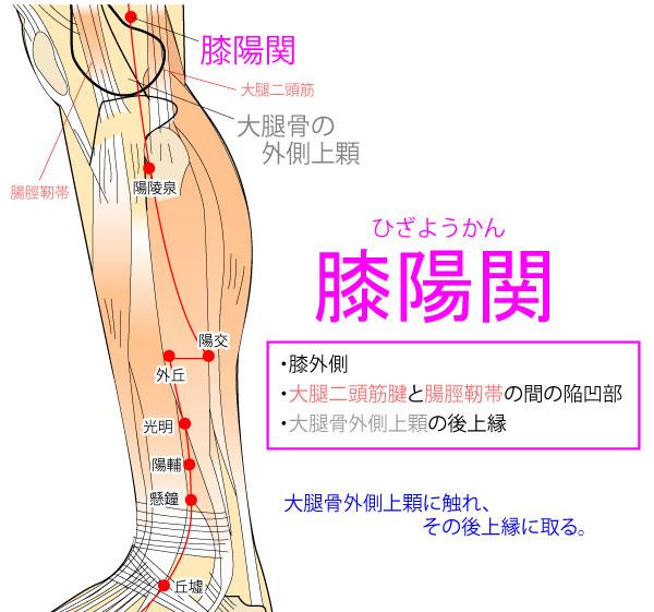 膝陽関(ひざようかん:GB33)