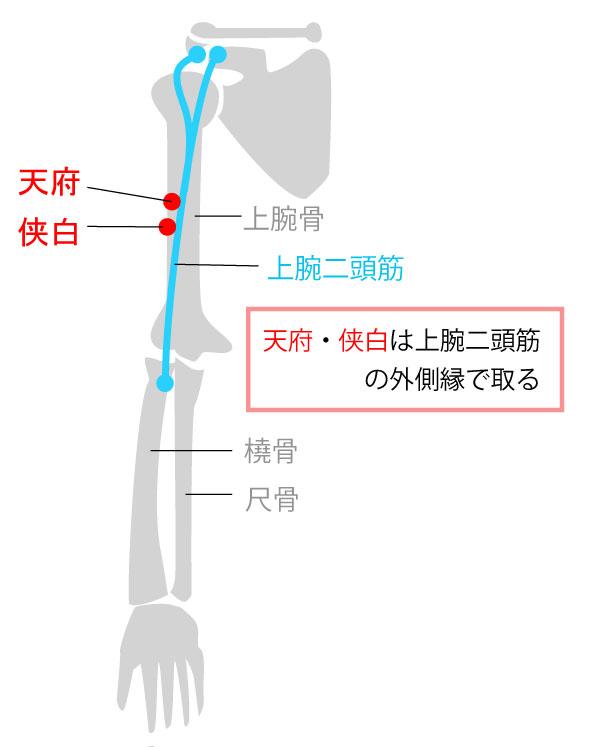 天府(てんぷ),侠白(きょうはく),経穴,ツボ