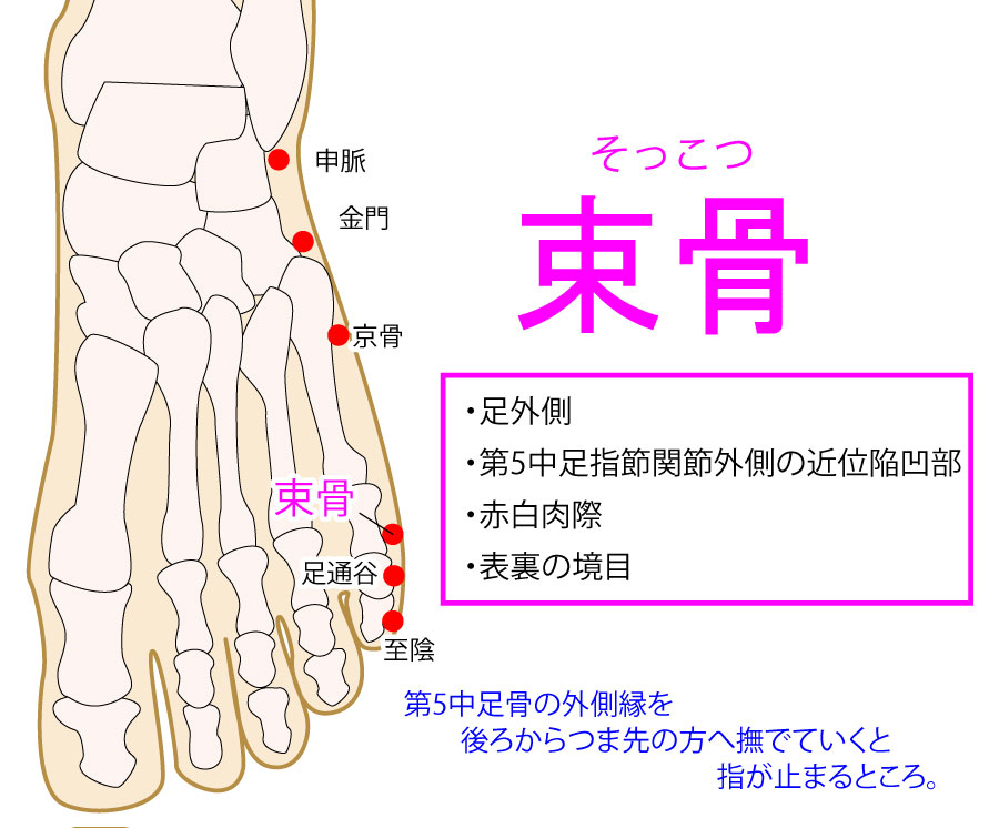 束骨(そっこつ:BL65)