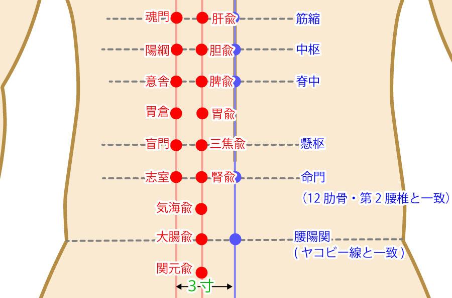 肓門(こうもん:BL51)