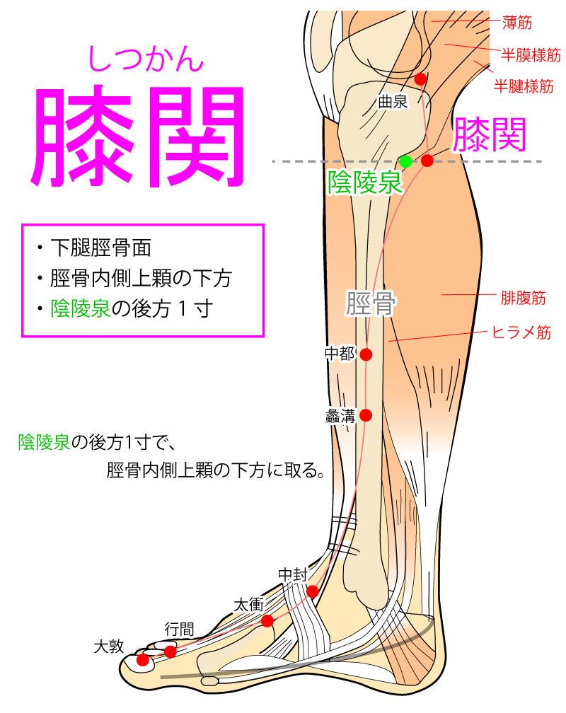 膝関(しつかん:LR7)