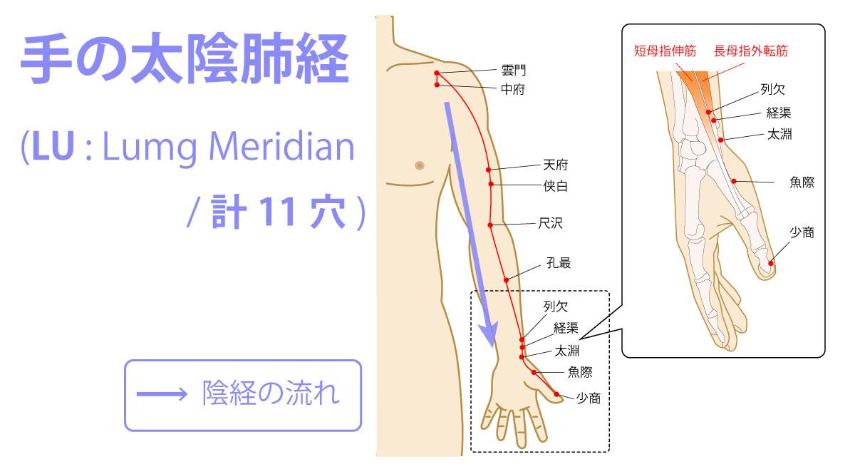 手の太陰肺経(たいいんはいけい:Lung Meridian)