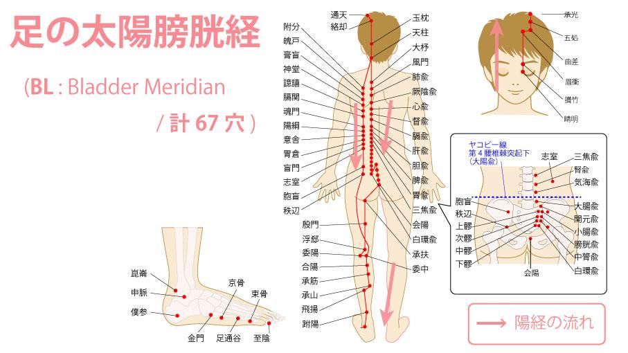 足の太陽膀胱経(たいようぼうこうけい:Bladder Meridian)