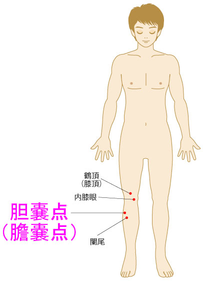 胆嚢点(たんのうてん)