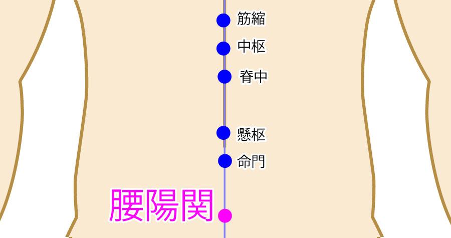 腰陽関(こしようかん:GV3)