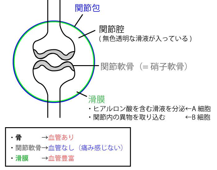 関節構成体を解説 | 水を抜くと癖になる??