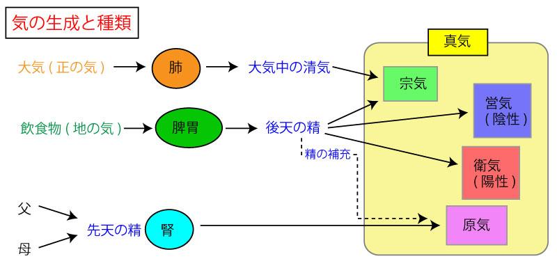 気(き)    東洋医学における生理物質②