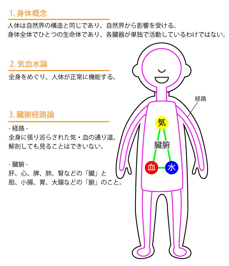 臓象説について
