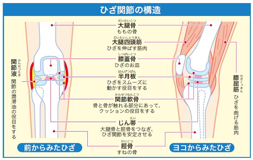 【疾患まとめ】膝関節の疾患